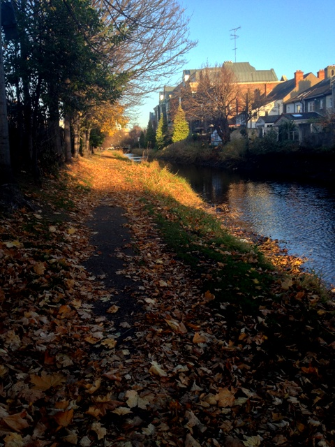 The canal path less traveled -- where Autumn still lingers, littered on the path. But you aren't fooled because you are aware the ducks and geese have flown the coop for winter as the canal waters are still and quiet (except near the locks)